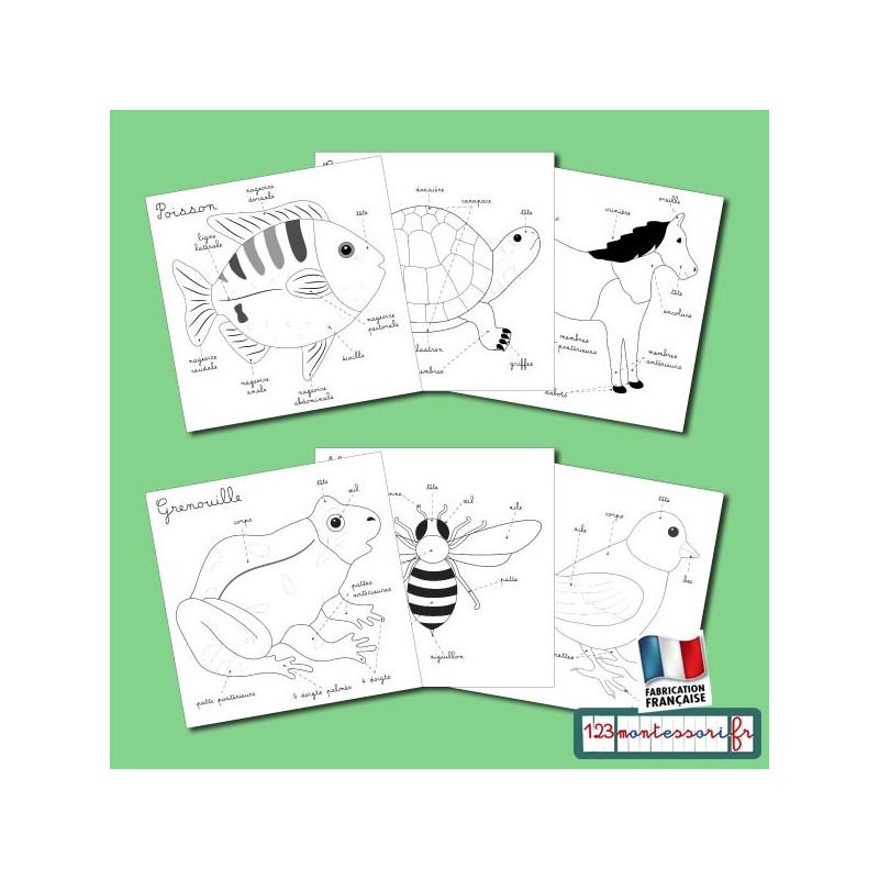 Exercices à partir des puzzles Montessori d'animaux Zoologie