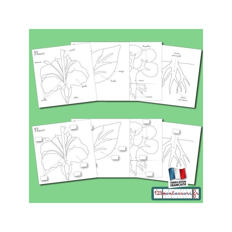 Exercices à partir des puzzles Montessori de botanique (fleur, feuille, arbre et racine)