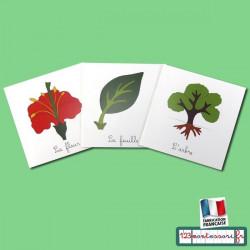 Lot de livrets de botanique (3 livrets)