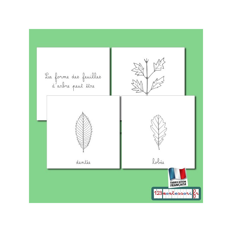 Nomenclature des feuilles d'arbre en pdf