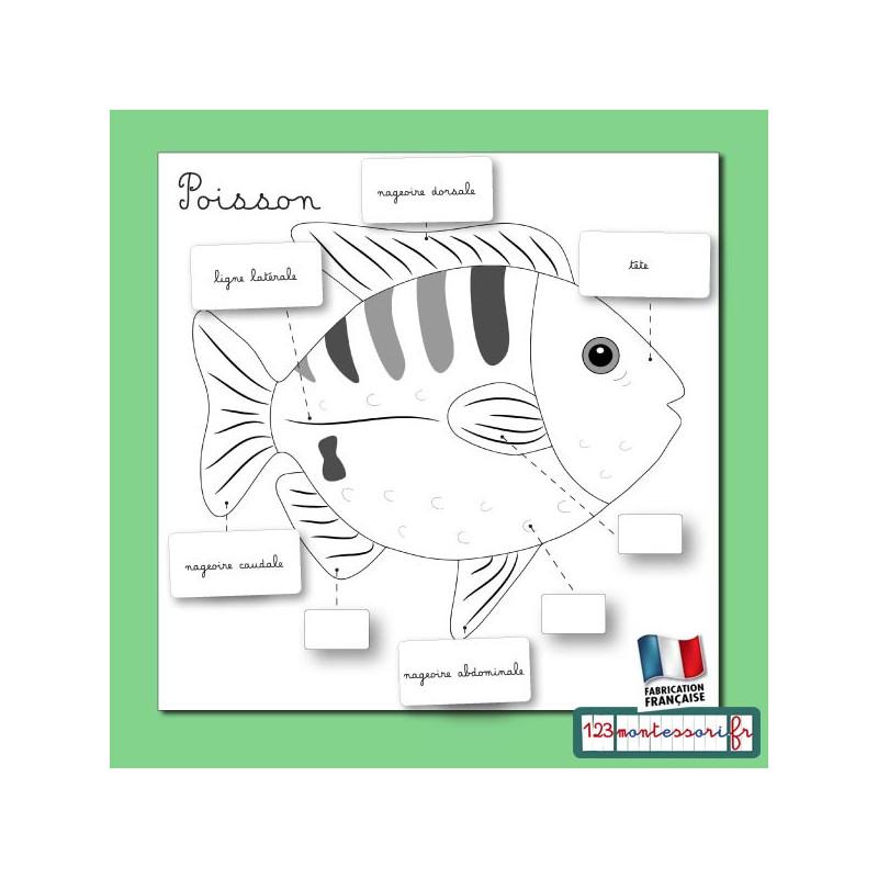 Exercices à partir des puzzles Montessori