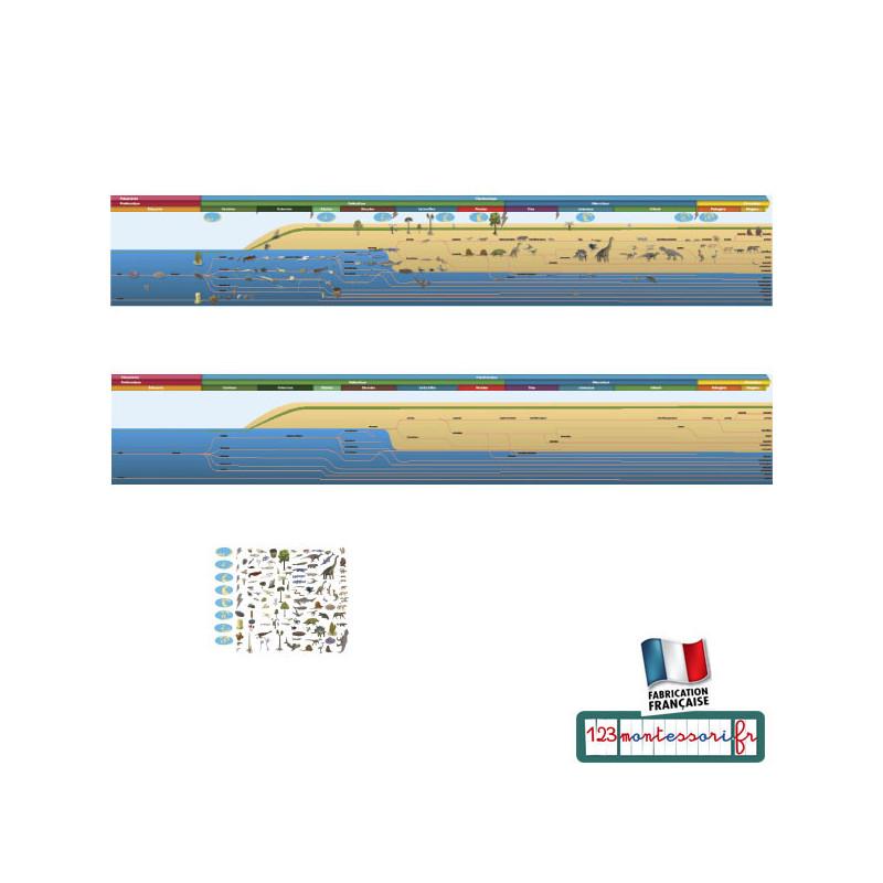 Frise des lignes de vie, frise du temps Montessori