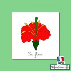 Fleur livret et images pour nomenclatures