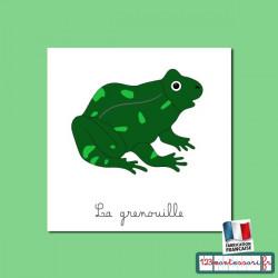 Grenouille livret et images pour nomenclatures